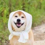 犬が吐くのは熱中症が原因?対処に要注意な3つのPOINTと予防対策!