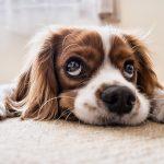 犬の皮膚病にサプリがおすすめ!本当に効果のあるランキングTOP5!