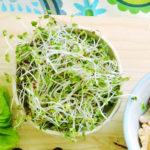 犬にブロッコリースプラウトは食べれる?与え方と驚きの効果を紹介!